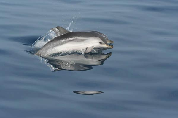 Image Gallery Small Dolphin