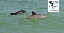 Harbour porpoises © Olaf Kleinwegen / GSM