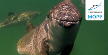 © Peter Verhoog/Marine Mammals