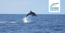 Bottlenose Dolphin © Steve Geelhoed