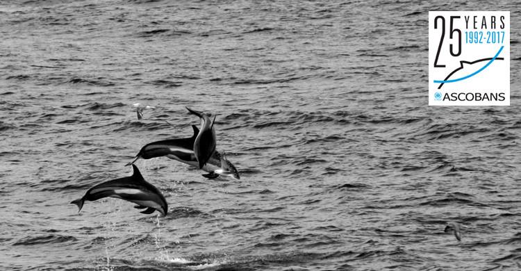 White-sided Dolphins © Luca Lamoni